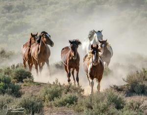 Heading out to photograph the Wild Mustangs