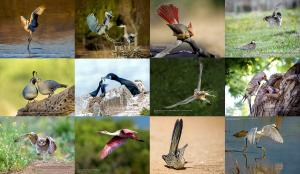 2018 Calendar of Birds available